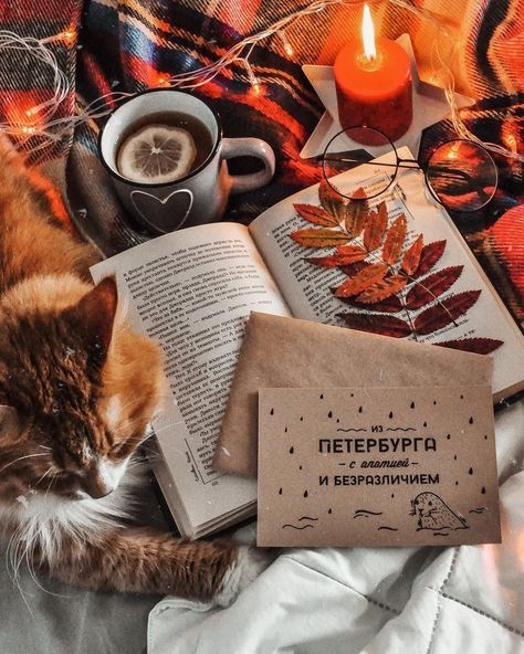 Autumn Vibes #photolibrary #autumn #fall #herbst #herbstliebe #cozy #tea #teatime #seasons