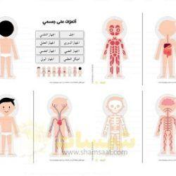 لوحة اجهزة جسم الانسان الجلد الجهاز الدوري الجهاز العضلي الجهاز الهضمي الهيكل العظمي الجهاز العصبي الجهاز التنفسي الجهاز البول Baby Mobile Projects To Try Kids