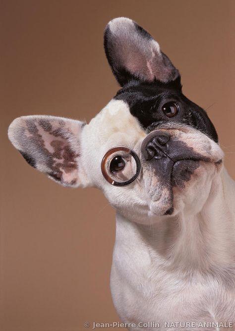 French bulldog avec boules de tee-shirt Homme