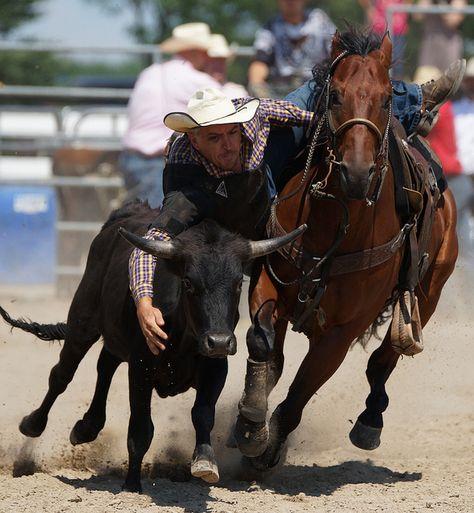 Rodeo - Bull-Doggin'!