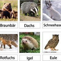 Projekt Tiere Im Winter Kindergarten Und Kita Ideen Vorschule Winter Basteln Kinder Unter 3 Aktivitaten Fur Vorschulkinder