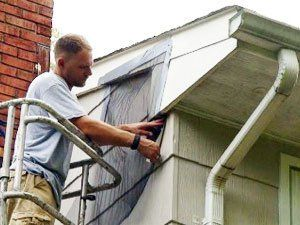 How To Get Rid Of Bats In Attic Keys To Fast Exclusion Bats In Attic Getting Rid Of Bats Attic