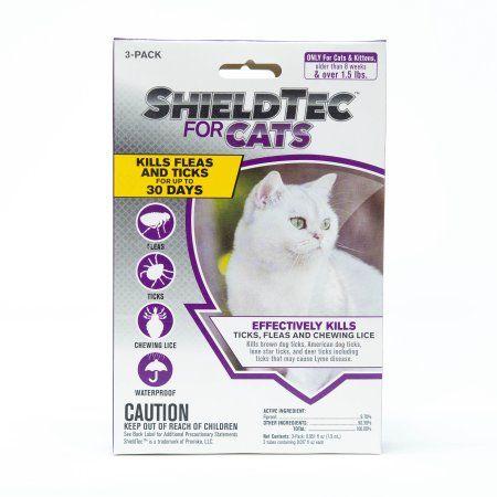 Pets Cat Fleas Flea Tick Fleas