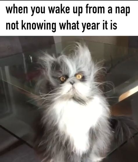 When You Wake Up From A Nap Not Knowing What Year It is...