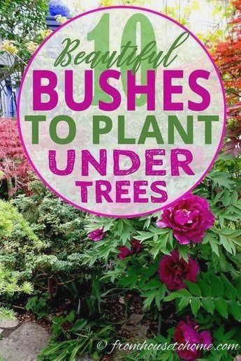 View All Prev1 Of 11next Looking For Shade Loving Shrubs To Plant
