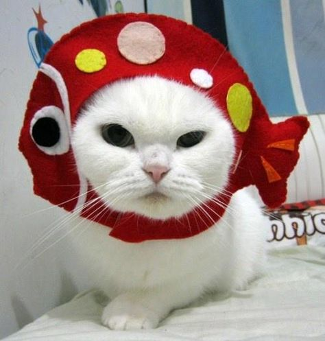Cat With Hat Etsy Cats Cats Cat Hat