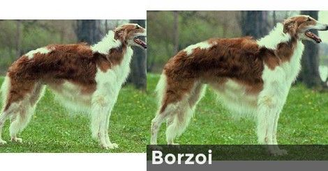 What Is Your Animagus Animagus Quiz Wizarding World Of Harry Potter Borzoi