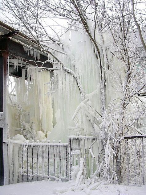 ♥ Wintertime in the Garden ♥