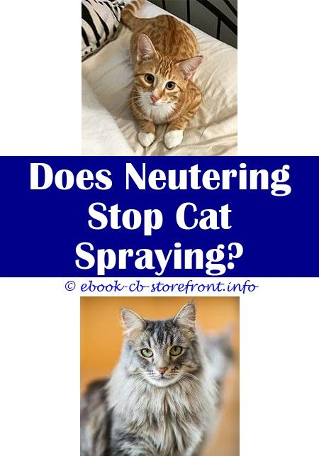 homemade increasing in the direction of discontinue cats beginning spraying
