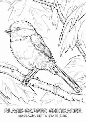 Massachusetts Chickadee Coloring Page Purple Kitty Bird