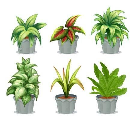 Plantas Sin Flor Buscar Con Google Plants Leafy Plants Vector Flowers