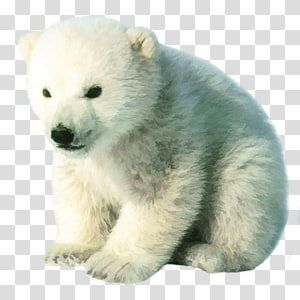 Pin On Real Bear Inspiration