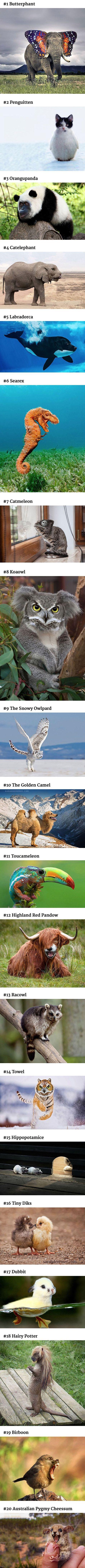 100+ Best Computogenesis images | photoshopped animals, animal mashups,  weird animals