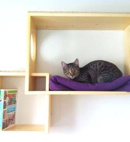 Wall Mounted Cat Shelves Wall Mounted Cat Shelf The Double Wave