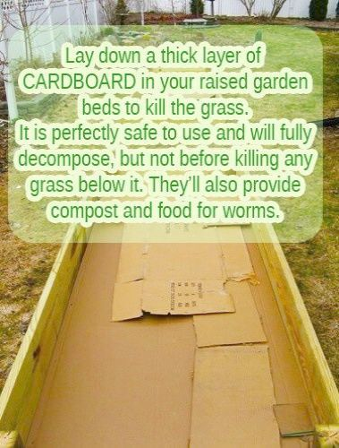 Remove Landscaping Rocks From Garden Also Raised Garden Bed Layers Within Raised Garden Beds This O Raised Garden Beds Preparing Raised Garden Beds Garden Beds