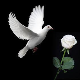 Cerita Cinta Mawar Putih   Catatan JPrasetyo