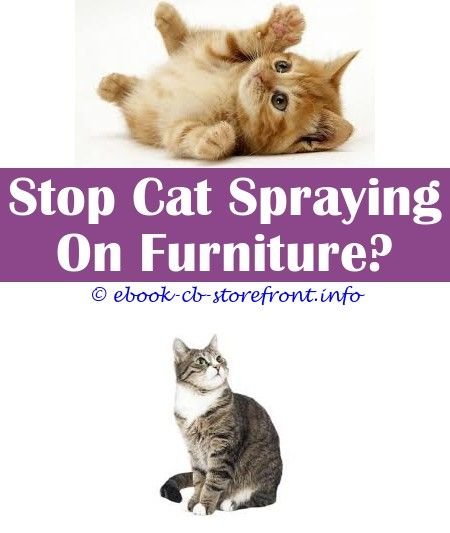 10 Reliable Cool Ideas Will A Male Cat Still Spray If He Is Neutered Frontline Spray For Cats And Kittens Keep Off Spray For Cats Review Will Aerosol Sensible