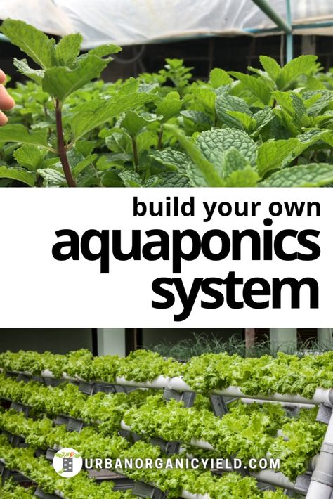 How to Build Aquaponics System Design