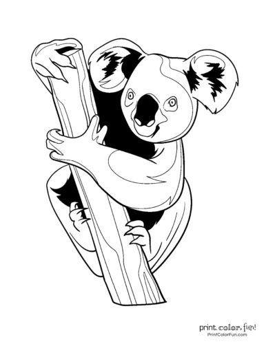 Cute Koala Coloring Pages 10 Free Cute Koala Coloring Pages Coloring Page Print In 2020 Cute Coloring Pages Animal Coloring Pages Coloring Pages