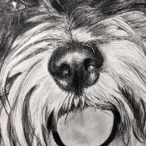 Havanese dog, pet portraits, christmas gifts, birthday gifts for him and her, graphite drawing, train noise, dog lovers
