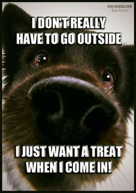 That Is So My Dog Love Quotes Funny Best Dog Quotes Dog Quotes