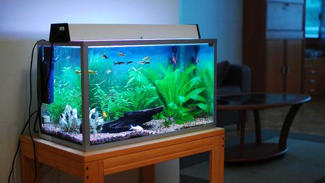The Best Home Aquariums of 2019