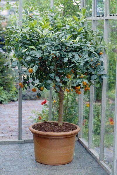 Jardineria Indoor 17 Originales Plantas De Interior Jardinería En Macetas Jardinería Limonero En Maceta