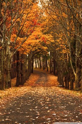 Ideas About Fall Wallpaper On Pinterest Wallpapers Iphone