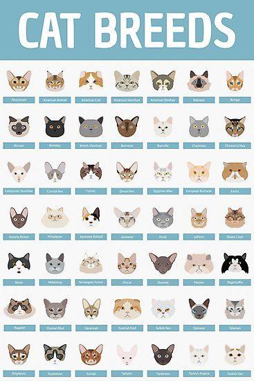 Cat Breeds Photographic Print Cat Breeds Cat Breeds Chart Cat Facts