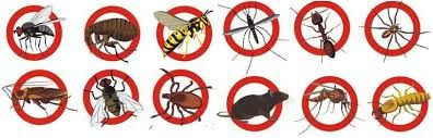 Pest Control Service Patparganj We Can Provided Best Service In Your Commercial Area And Residential Area Fleas Cockroache Pest Control Services Pest Control Diy Pest Control