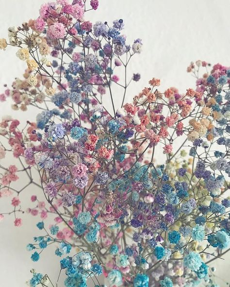 Candy Floss Flowers Candy Floss Pastel Colors Flowers