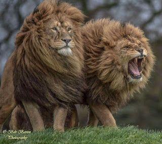 Animal Lucu Binatang Binatang Buas Hewan