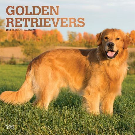 Browntrout Publishers 2019 Golden Retrievers Calendar Golden