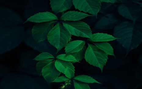 Green Leaves Dark Background Hd Wallpaper With Images Nature