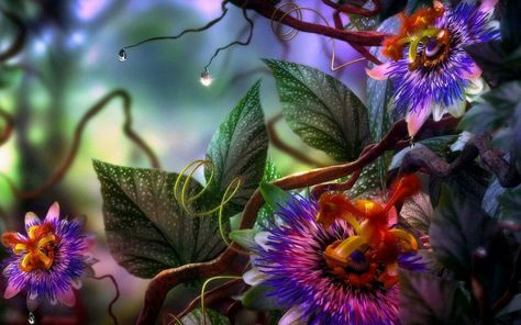 Free Abstract Flowers Hd Wallpapers Download 3d Abstract
