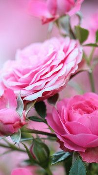 Kwiaty W Zoltej Kopercie Tapeta Na Telefon Floral Art Winter Beauty Flowers