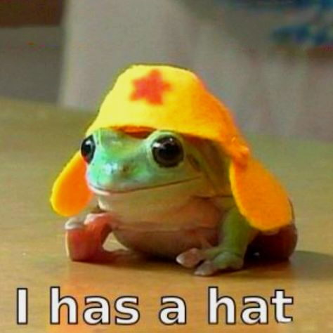 Its The Frog In The Yellow Hat Pics That Make You Say Awe - Frog wearing two snails as hat becomes star of hilarious photoshop battle