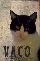 Gato En Adopcion Apata Protectora De Animales De Tarazona