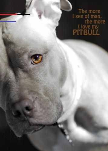 Full Watch Pit Bulls And Parolees Season 16 Ep 7 Online 2020 Hd By Pit Bulls And Parolees S16e7 Exclusive Sep 2020 Medium