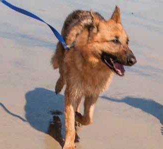 Pin By Justine Darmanian On Luna Dog Care Dogs Petco