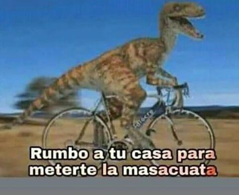 Best Memes Para Contestar En Whatsapp Groseros Ideas Memes Meme Dinosaurio Memes Graciosos
