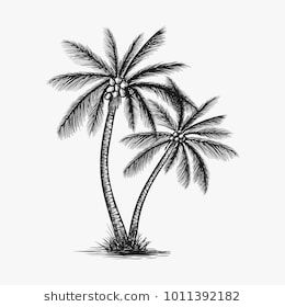 Hand Drawn Coconut Tree Vector Inspiration Tree Tattoo Art Coconut Tree Drawing Tree Tattoo