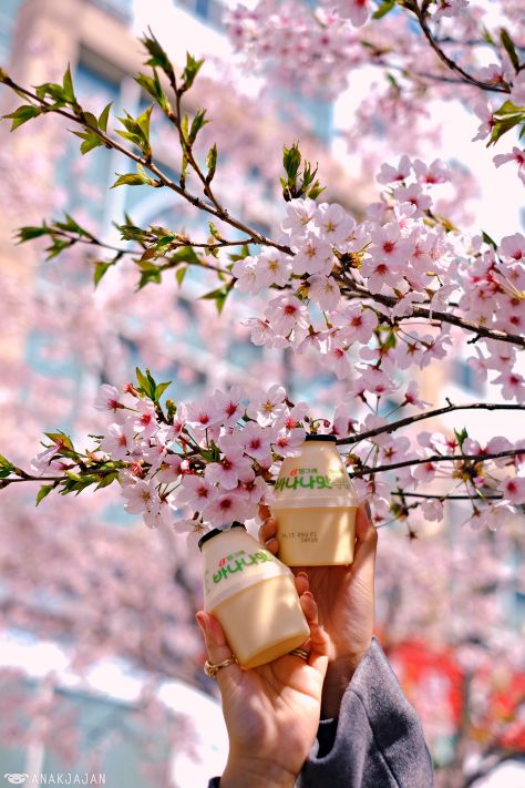 Top Places To See Cherry Blossom In Seoul Places To See Cool Places To Visit The Good Place