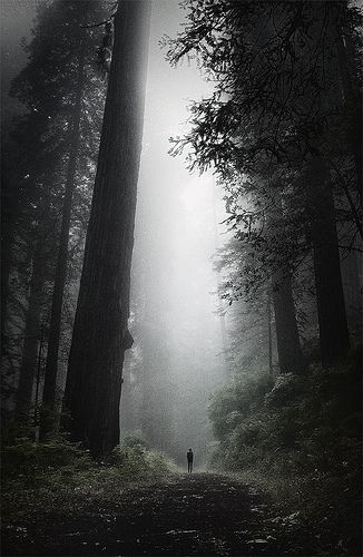 Hike through a redwood forest