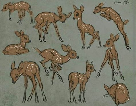 Line Drawings Of Animals Deer : How to draw animals drawings and animal
