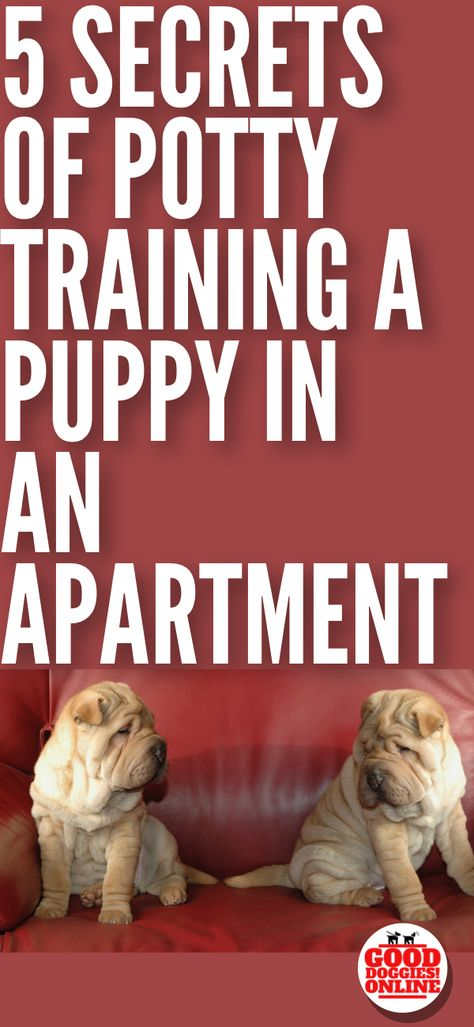 5 Secrets On How To Potty Train A Dog In An Apartment Potty
