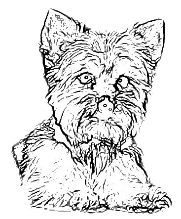 Dog Color Pages Printable Print This Page Dogs Coloring Pages Coloring Pages Anny Imagenes Dog Coloring Page Coloring Pages Printable Print