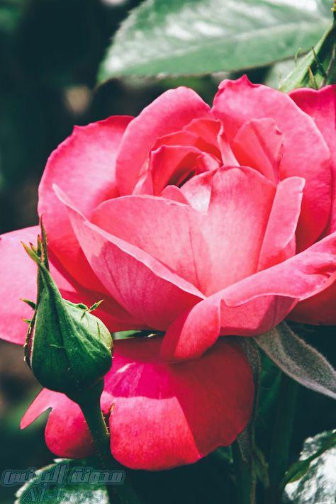 بروفايل روعة للبنات 4 Images For Facebook Profile Best Facebook Image