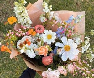 My Flower, Wild Flowers, Beautiful Flowers, Flower Bomb, Happy Marriage Tips, No Rain, Flower Aesthetic, Planting Flowers, Floral Arrangements