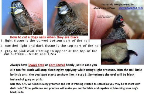 Safely Trim Your Dog S Black Nails Lacota Overton Wrapreneur Dog Nails Trimming Dog Nails Clipping Dog Nails
